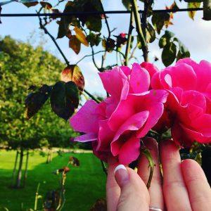 Sofiero flowers